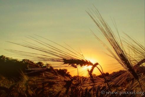 ...senken sich vor die Sonne