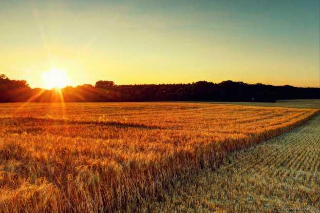Die Sonne steht über dem Feld.