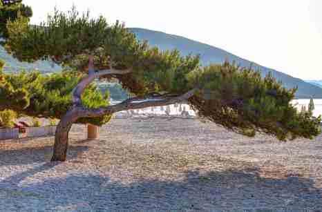 Der Baum passt sich an.