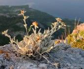 Pflanzen auf dem Gipfel